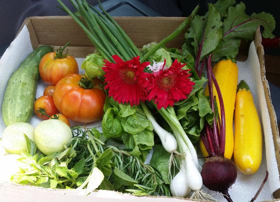 Lorena's Wilsonville community garden July 9, 2015