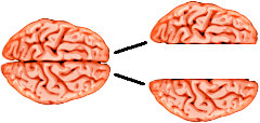 A split brains do not lead to split consciousnesses